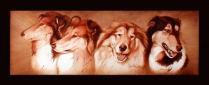 Collie Show dogs portrait by Mural Artist 4 u