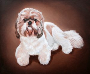 Lhasa Apso hand painted portrait on canvas